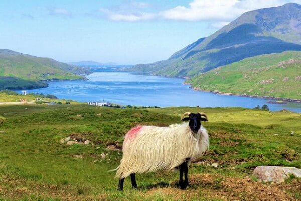Free Hiking Guides with Hillwalk Tours